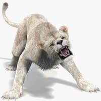 Lioness 2 (White, Fur, Animated)