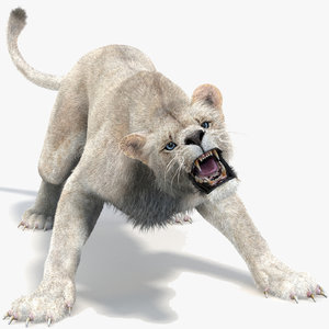 lion 2 fur cat model