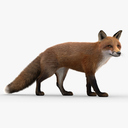 Red Fox 3D models
