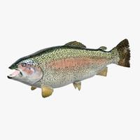3D model rainbow trout
