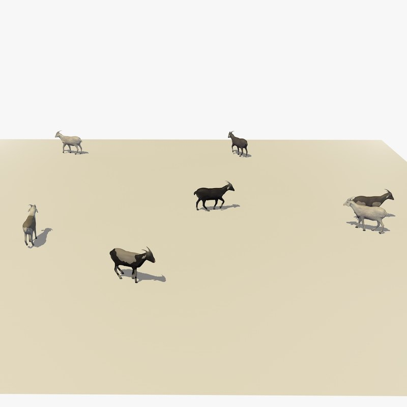 3D group herd goats walking model