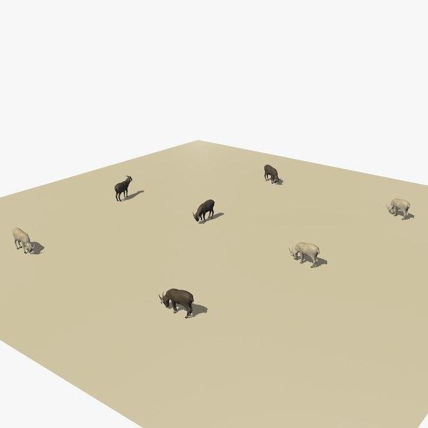 group herd goats eating 3D model
