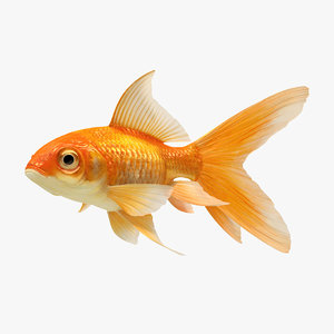 3D model goldfish 2 animation