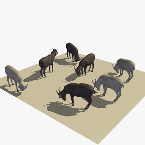3D version 2 herd goats