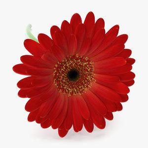 gerbera petal 3D model