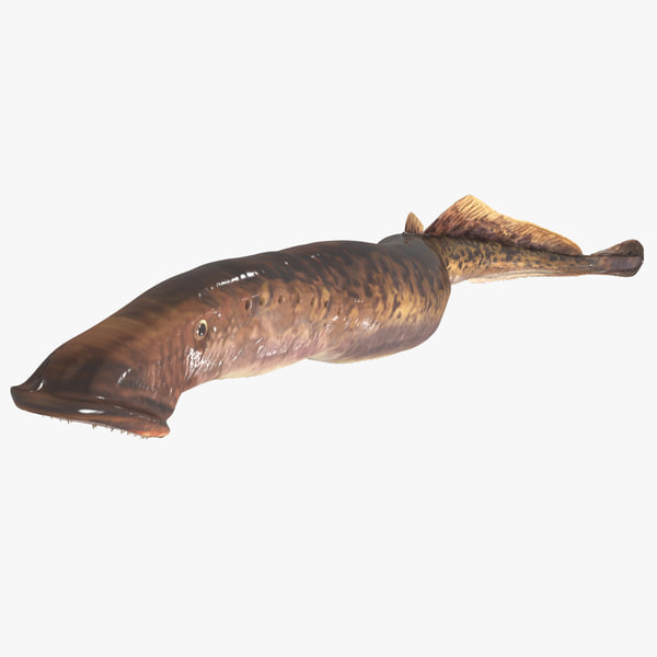 sea lamprey model