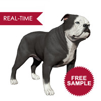 sample english bulldog real-time 3D model