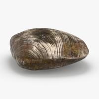 3D clam---clam-01