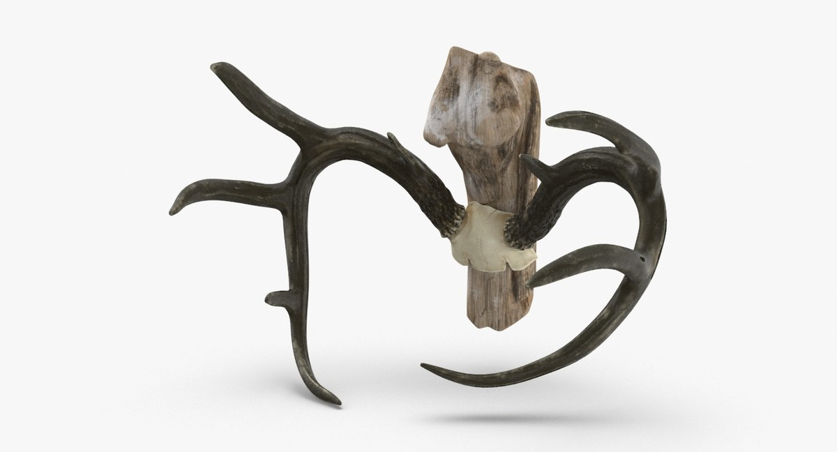 mounted-antlers-01 3D model