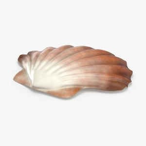 3D clam-shells---shell-02