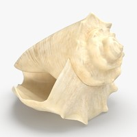 Conch Shell 03
