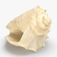 conch-shells---shell-03 3D