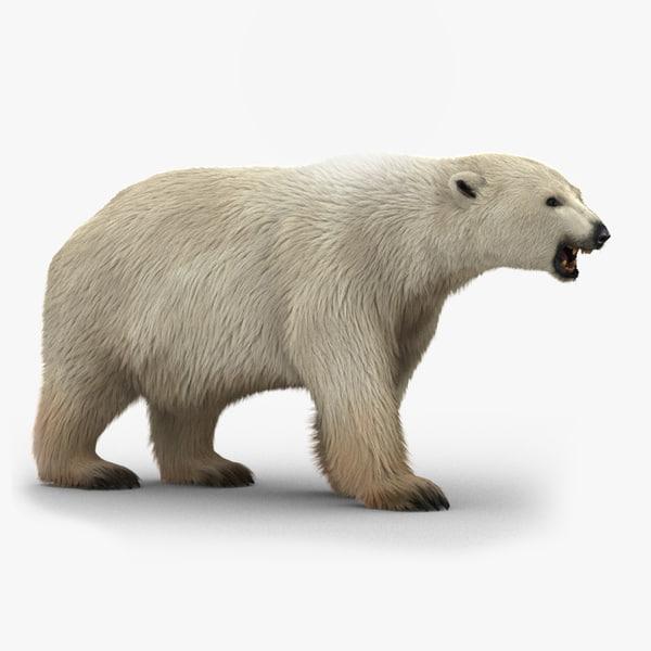 polar bear rigged fur model