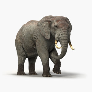 elephant rigged 3D