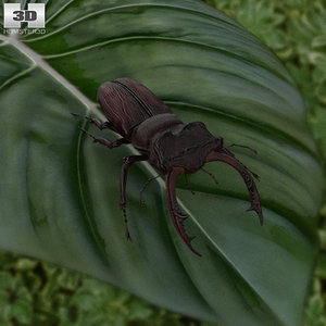stag beetle 3D