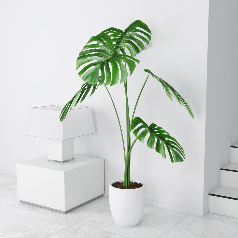 3D model monstera pot