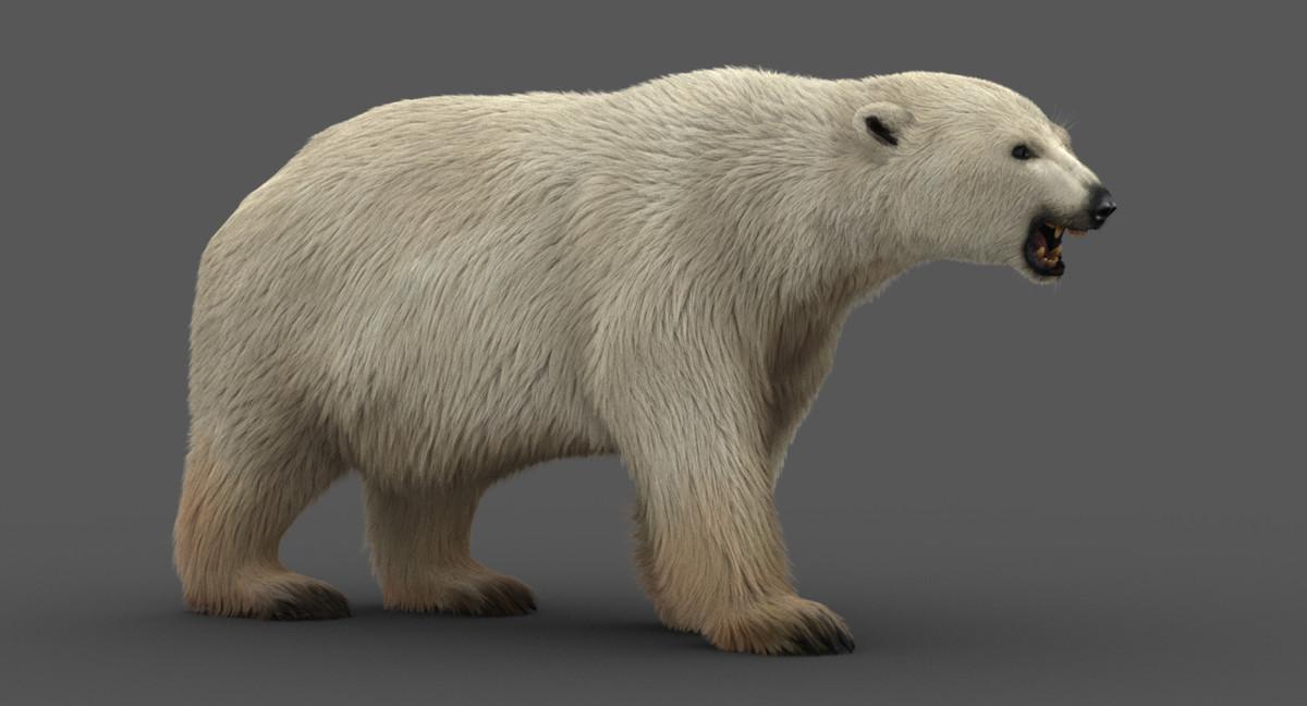 3D polar bear modeled animation