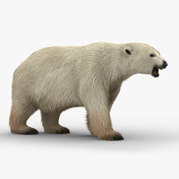 3D polar bear modeled animation
