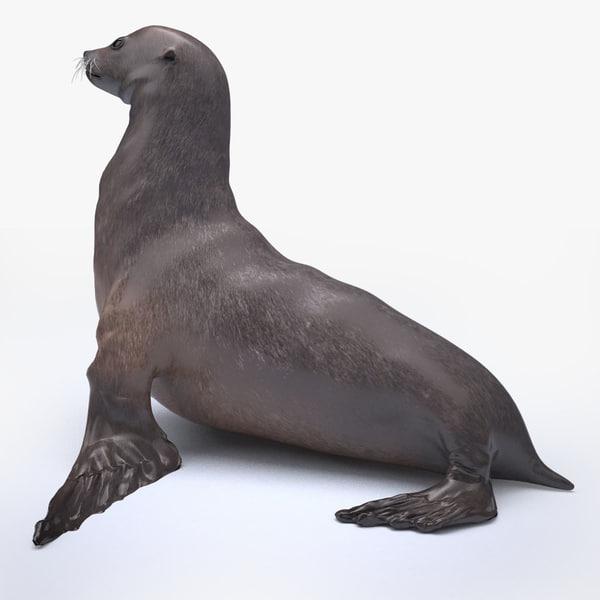 sea lion 3D model