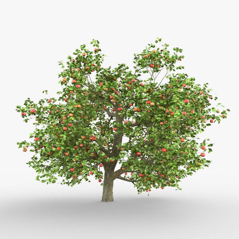 tree apple model