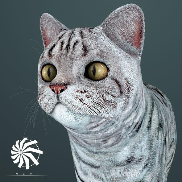 cat - british silver 3D model