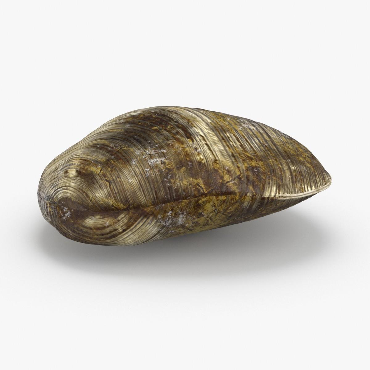 clam---clam-03 3D model