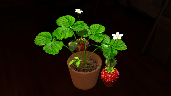 strawberry plants 3D model