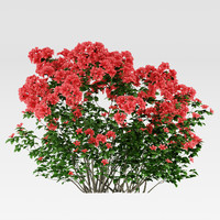 flowering azalea rhododendron shrub model
