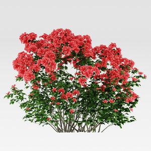 flowering azalea rhododendron shrub model
