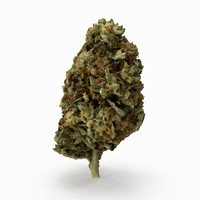 3D model cannabis bud