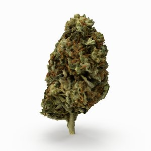 3D model cannabis bud
