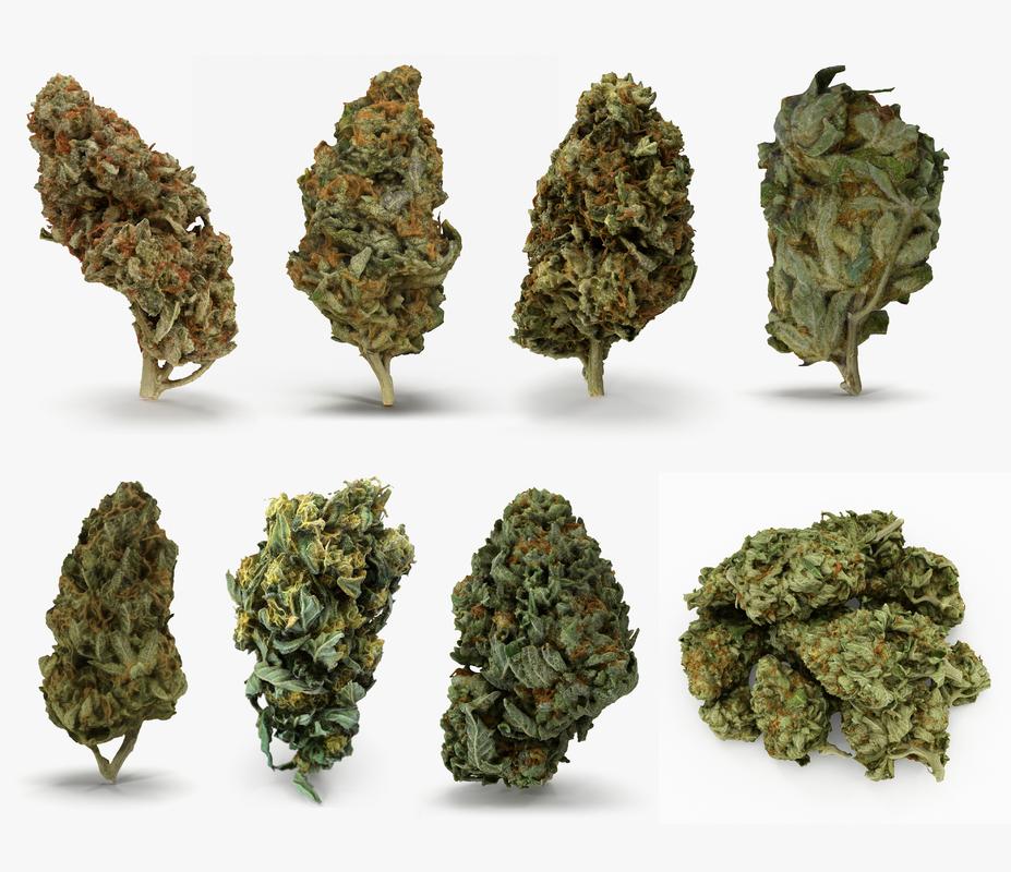 cannabis bud scan model