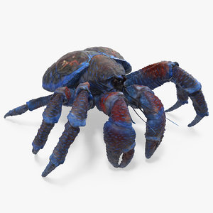 coconut crab 3D