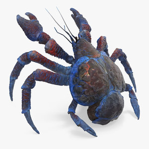 3D coconut crab rigged model