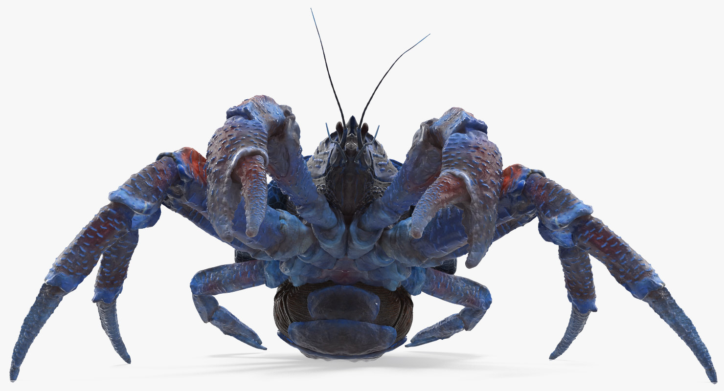 robber crab walking pose 3D