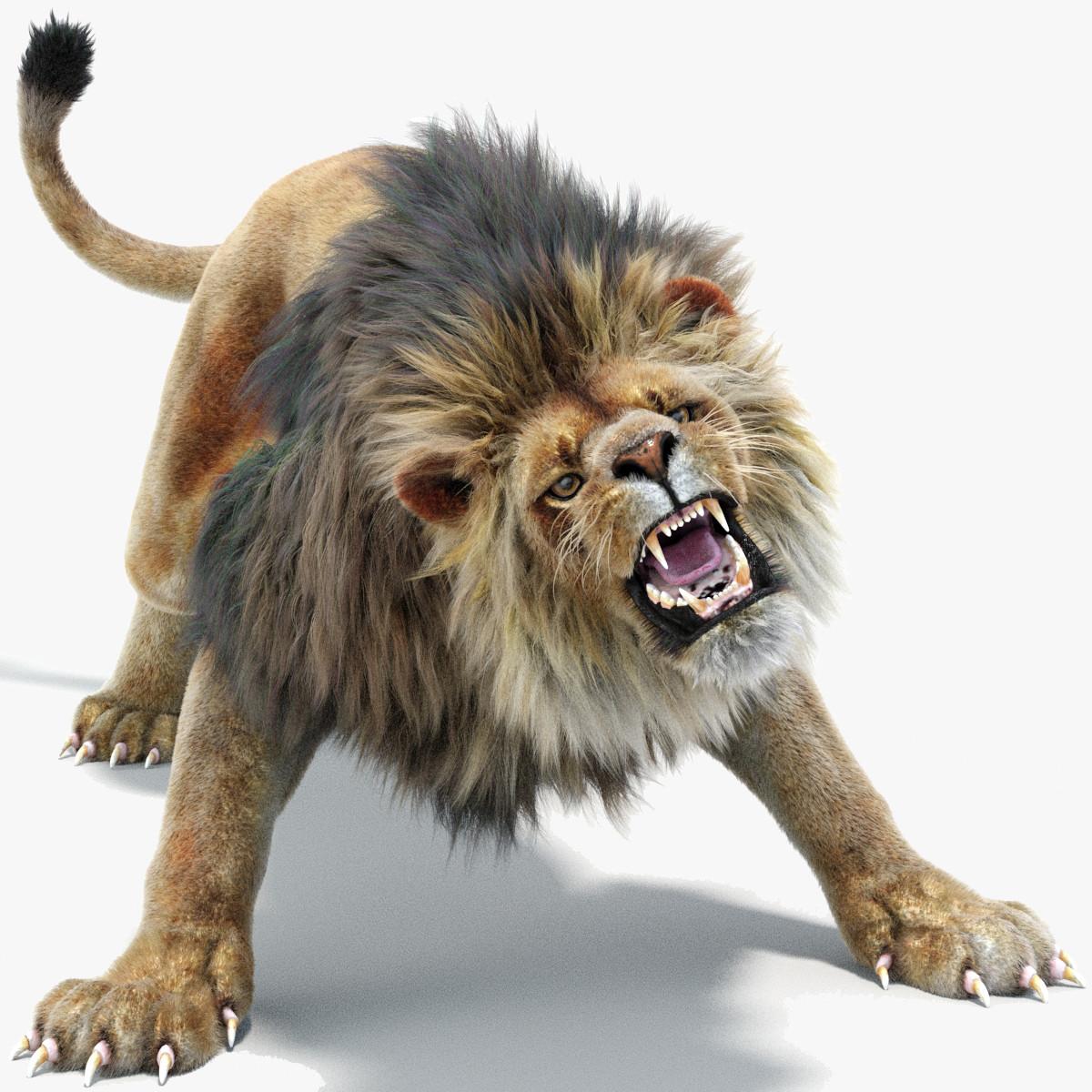 lion 2 fur colors model