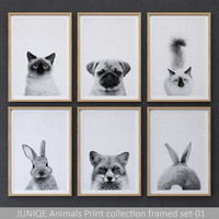 Animals Print collection framed set-01