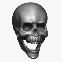 3D high-res skull model