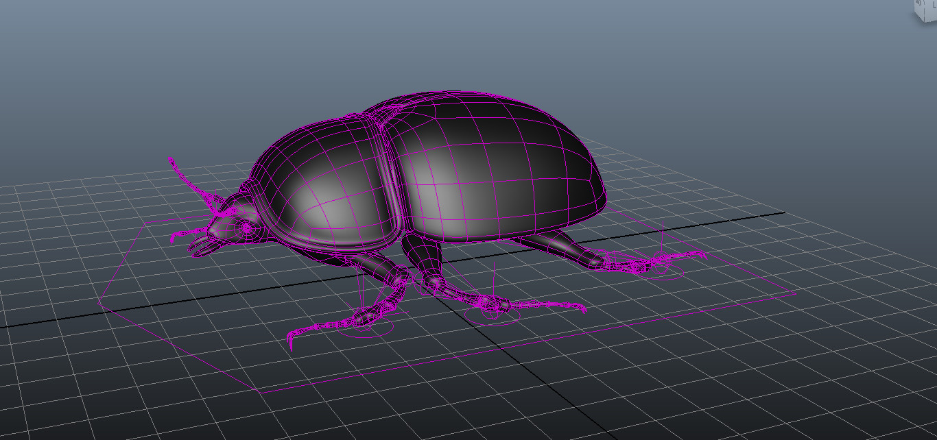 beetle rigged 3D model
