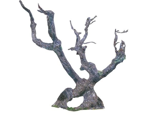 3D scanned laurel forest
