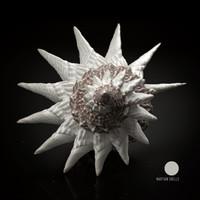 3D model martian shells