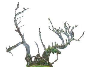 scanned laurel forest 3D model