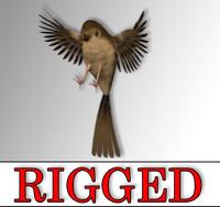 3D sparrow bird rig