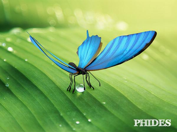 3D butterfly fly