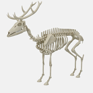 deer skeleton 3D