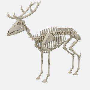 deer skeleton 3D