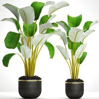 3D banana plants