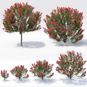 oleander flower model