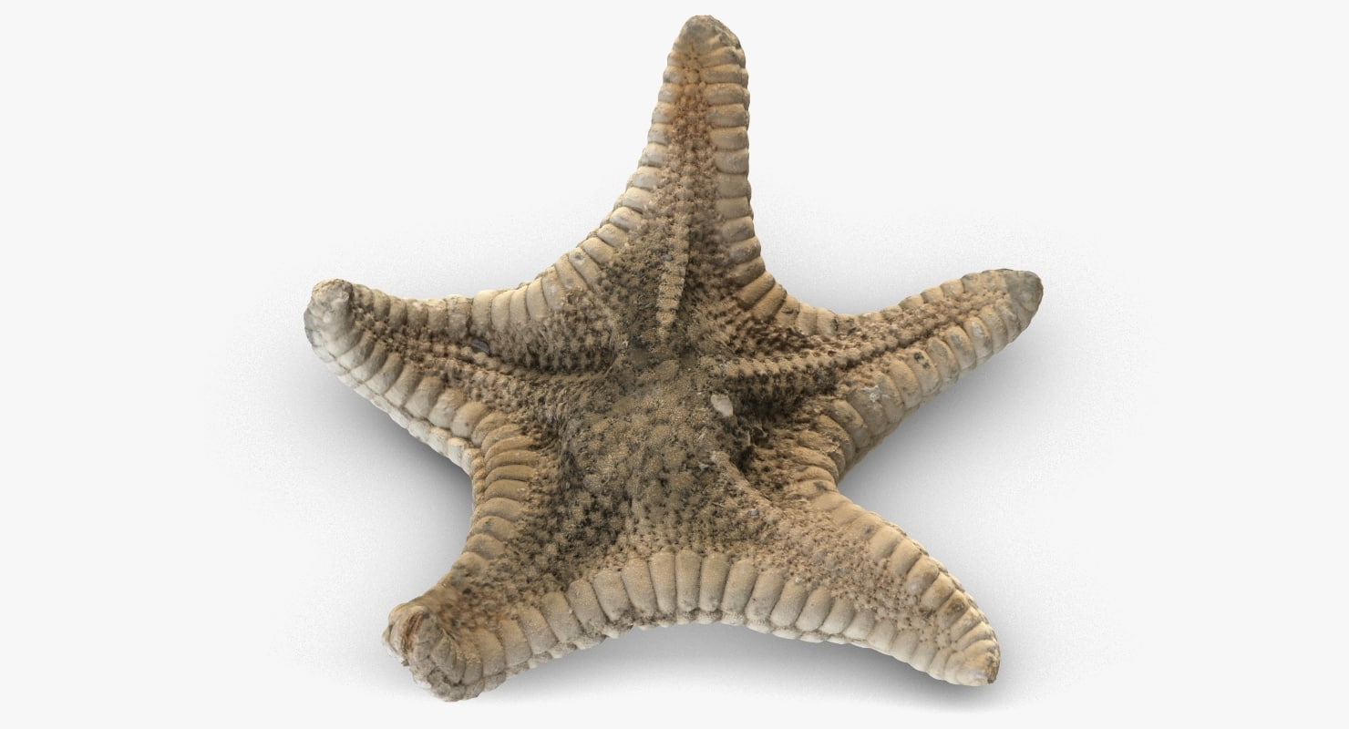 3D model starfish 3