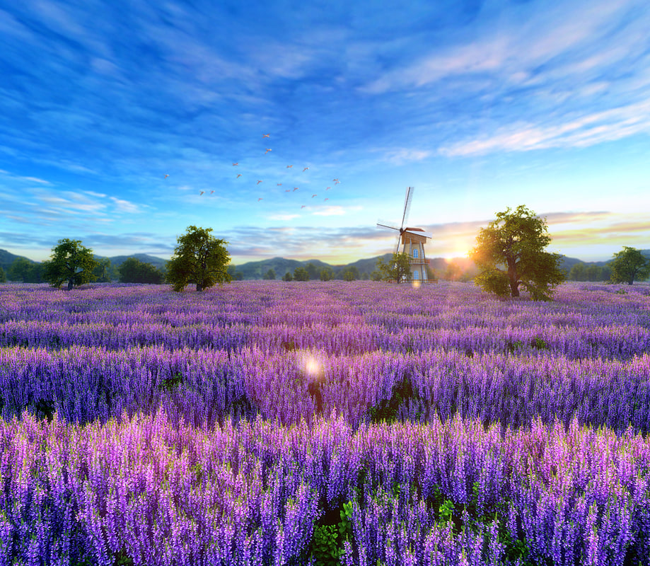 3D fantasy lavender fields